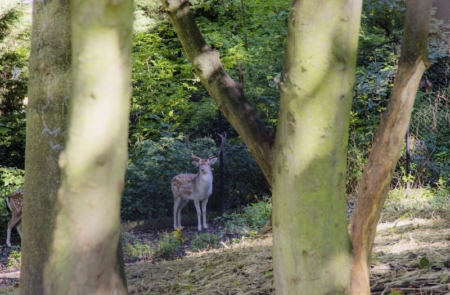 Alexandra-Palace-Deer-by-Liam-Logan-resident-at-North-London-YMCA-Hostel.